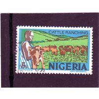 Нигерия.Ми-276.Крупный рогатый скот - фотогравюра темная. Серия: экономика.1973.