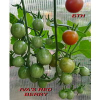 """Семена томата """"IVA'S RED BERRY""""(черри)"""