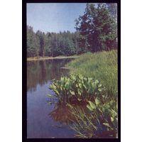Река,лес