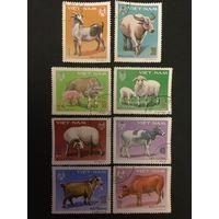 Домашние животные. Вьетнам, 1979, серия 8 марок