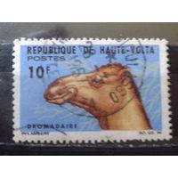 Верхняя Вольта 1966 Верблюд