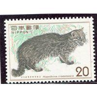 Япония. Ириомотейская кошка