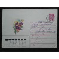 1985 виола прошло почту