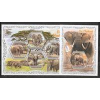 Кот-д'Ивуар 2018 Слоны