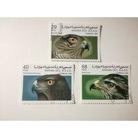 Сахара 1996. Хищные птицы