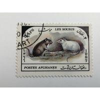 Афганистан 1987. Фауна - Мыши.