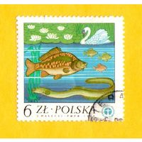 Марка Польша-1983 -10-я годовщина Конференции Организации Объединенных Наций по проблемам окружающей человека среды в Стокгольме, Швеция