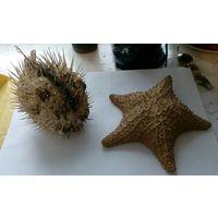 Рыба Фугу и морская звезда. Без МПЦ!