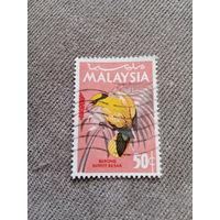 Малайзия. Птицы. Burong Kunyit Besar