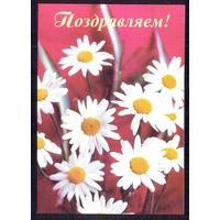 1999 ДМПК Беларусь Поздравляем ромашки