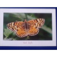 Нидерланды бабочка