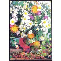 1999 ДМПК Беларусь ромашки ягоды