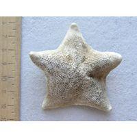 Морская звезда 5