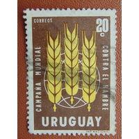 Уругвай. Флора.