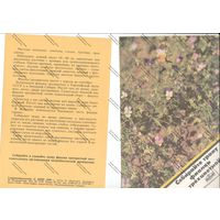 Буклет главкоопторгрекламы - собирайте траву фиалки трехцветной 1980 г.