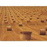 Курсовая Себестоимость продукции растениеводства, пути и резервы ее снижения на примере СПК Гигант