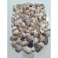 Ракушки морские 1 кг.