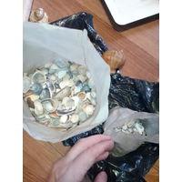 Ракушки для аквариума пакет тяжелый