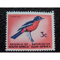 ЮАР.  Птицы.
