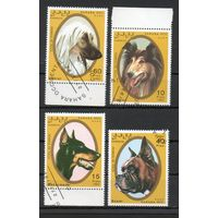 Собаки Сахара 1992 год 4 марки (серия?)
