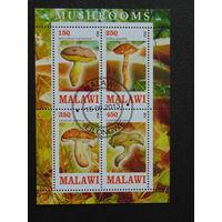 Малави  2013г. Грибы.