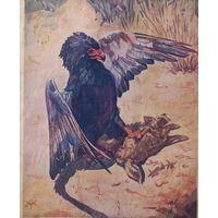 """Хищная птица"""" Фигляръ"""" терзающая молодого шакала.  25х19 см."""
