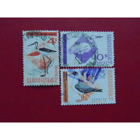 Уругвай. Птицы 1967,1968,1970г.