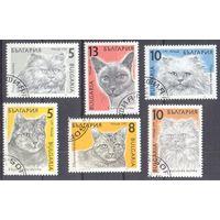 Болгария кошки