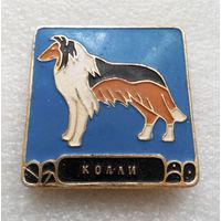 Колли. Породы собак. Животные #0440-UP14