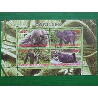 Конго 2009г. Фауна.