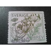 Швеция 2009 растение