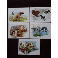 """16 открыток художника Л.Аристова из набора """"Друзья человека"""". 1972г."""