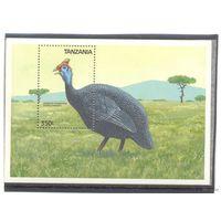 Танзания птицы фазан