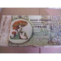 Учебное пособие. Набор муляжей грибов.