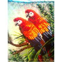 """Картина,вышитая крестиком  """"Попугайчики"""""""