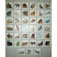 Развивающие карточки животные СССР