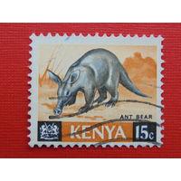 Кения. Фауна.
