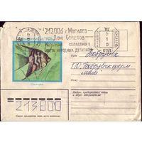 1982 год Скалярия