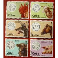 Куба. Домашние животные. ( 6 марок ) 1975 года. 4-17.