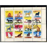 Оман 1972г. кошки и собаки. 8м. малый лист