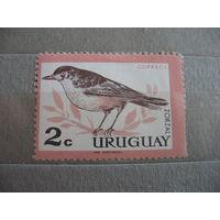 Уругвай. Птичка. 1963г.