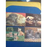 Календарик Коты котята кошки