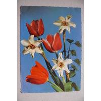 Цветы; 1965, подписана.