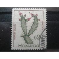 Монако 1960 Кактус