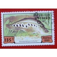 Бенин. Рыбы. ( 1 марка ) 1999 года.