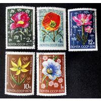 СССР 1974 г. Цветы. Флора, полная серия из 5 марок #0006-Ф2P2