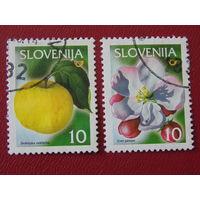 Словения. Флора.