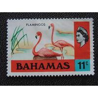 Багамы 1971 г. Фауна.
