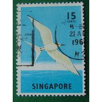 Сингапур.  Птицы.