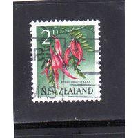 Новая Зеландия.Ми-393. Попугая клюв (Clianthus puniceus). 1960.